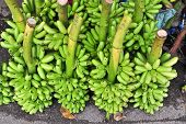 Bunch Of Green Bananas On Floor In Market