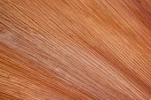 Brown Striated Patterns On Base Of Fallen Palm Leaf