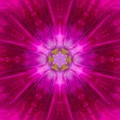 Purple Mandala Flower Kaleidoscope Isolated On Black