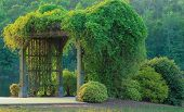 picture of pergola  - Pergola at the park with green vines and bushes surrounding it - JPG