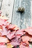 Toad And Fall Leaves