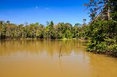 Thick, brown, muddy lake in the rainforest