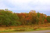 Autumn colorful foliage.