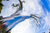 "Metal Tree, ""graft""( 2008-2009) By American Artist Roxy Paine"