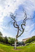 Metal Tree,