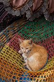 Red Kitten For Sale In A Basket At Chichicastenango Market Guatemala