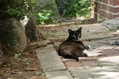 Lying Stray Black Cat