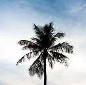 Silhouette Shot Of Coconut Tree And Sky In Background.