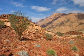 Desert landscape with an Acacia tree, Brandberg mountain, Namibia