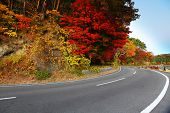 Highway with colorful maple leaves