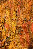 Background Of Orange Wet Stone Rock Wall Texture Outdoor