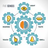 image of organ  - Five senses concept with human organs icons and brain in cogwheels vector illustration - JPG