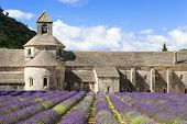 Abbey Of Senanque And Lavender Flowers