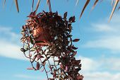 plant in flowerpot with blue sky behind