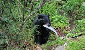 Black Bear Lunch Time