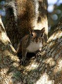 Staring Squirrel