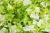 image of endive  - closeup of chopped escarole endive - JPG
