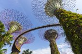 The Botanical Of Garden By The Bay In City At Singapore