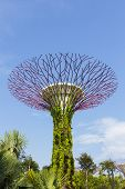 The Botanical Tree Of Garden By The Bay