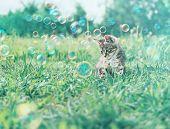 Kitten On Summer Grass