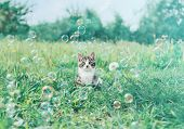 Cute Kitten Among Soap Bubbles