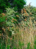 Rural Reed Landscape