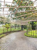image of creeper  - Structure bamboo roof for vine creeper plant over footpath in the park