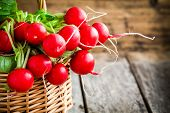 stock photo of radish  - bright fresh organic radishes with leaves in a basket - JPG