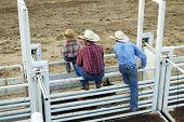 stock photo of brahma-bull  - Cowboys - JPG