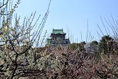 foto of kinky  - Osaka Castle and plum blossoms in spring season - JPG