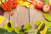 image of rowan berry  - Autumn leaves - JPG