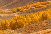 A Valley Filled With Golden Aspen Trees