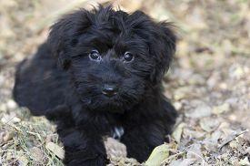 foto of puppy eyes  - Cute puppy with big puppy dog eyes outdoors - JPG