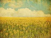 grunge image of a sunflower field on a vintage paper