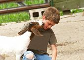 pic of feedlot  - A young boy reacts to being kissed by a goat - JPG