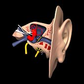 modelo 3D do ouvido