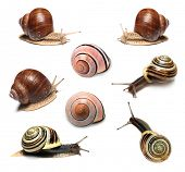 stock photo of hermaphrodite  - Snails collection on white background - JPG