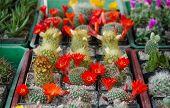 cactus excerpt from plant fair