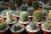cactuses on plant fair