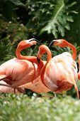 Socializing Flamingos