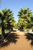 Palm Trees In Federico Garcia Lorca Park