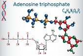 Adenosine Triphosphate (atp) Molecule, Is Intracellular Energy Transfer And Required In The Synthesi poster