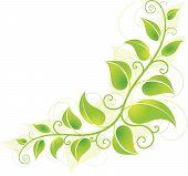 Green Corner Vine.Eps