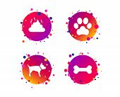 Pets Icons. Dog Paw And Feces Signs. Clean Up After Pets. Pets Food. Gradient Circle Buttons With Ic poster