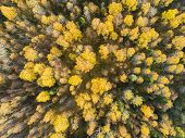 Aerial View Over Forest During Vibrant Autumn Colors. Aerial View Of Woods. Aerial Autumn Forest. Ae poster