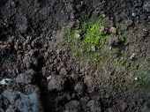 Bryophytes And Soil