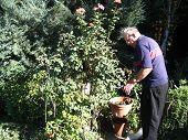 Senior In The Rose Garden