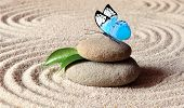 A Blue Vivid Butterfly On A Zen Stone With Circle Patterns In The Grain Sand. poster