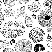 Sea Shells And Sea Urchin Shells poster