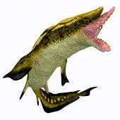 Edestus Shark Mouth 3d Illustration - Edestus Was An Early Shark That Lived During The Carboniferous poster